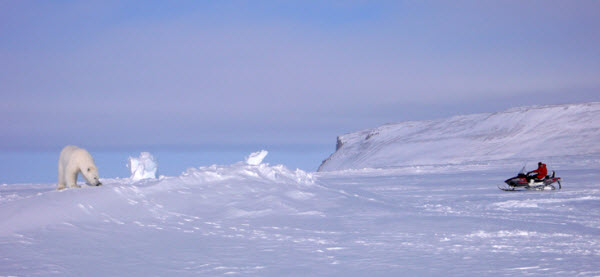 viajes ártico polar
